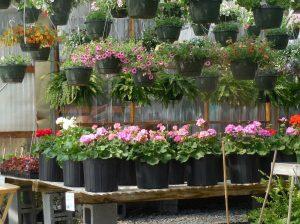 garden center pos